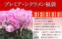 ルーフバルコニーにいかがでしょうか!!プレミア・シクラメン福袋【プレミアシクラメン1鉢、季節の鉢花1鉢、鉢物一番肥料1袋】