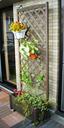 かなり安いのでお買い得!天然木製 ラティス付きプランター(ハイタイプ 180cm)