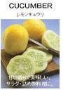 ルーフバルコニーで珍しい野菜を育てませんか!?【世界の果菜】 レモンきゅうり